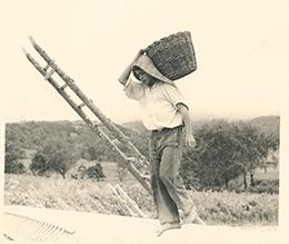 Homem cesta as costas.png