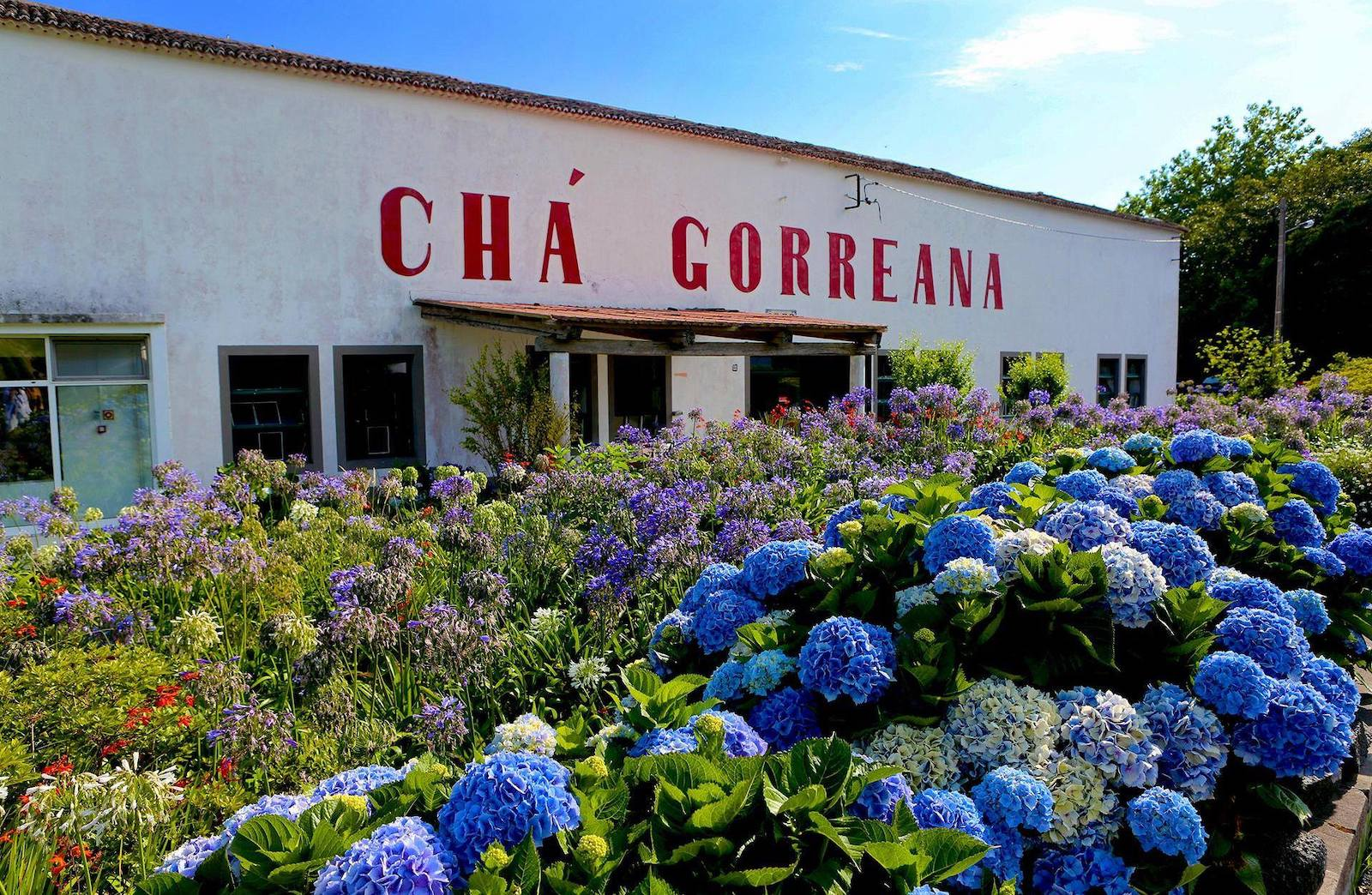 Gorreana Green Tea and its new companies: Pineapple, Hibiscus, Lúcia Lima, Aníse, Lemon Grass, Pennyroyal, Parsley and Mint + Lemon.